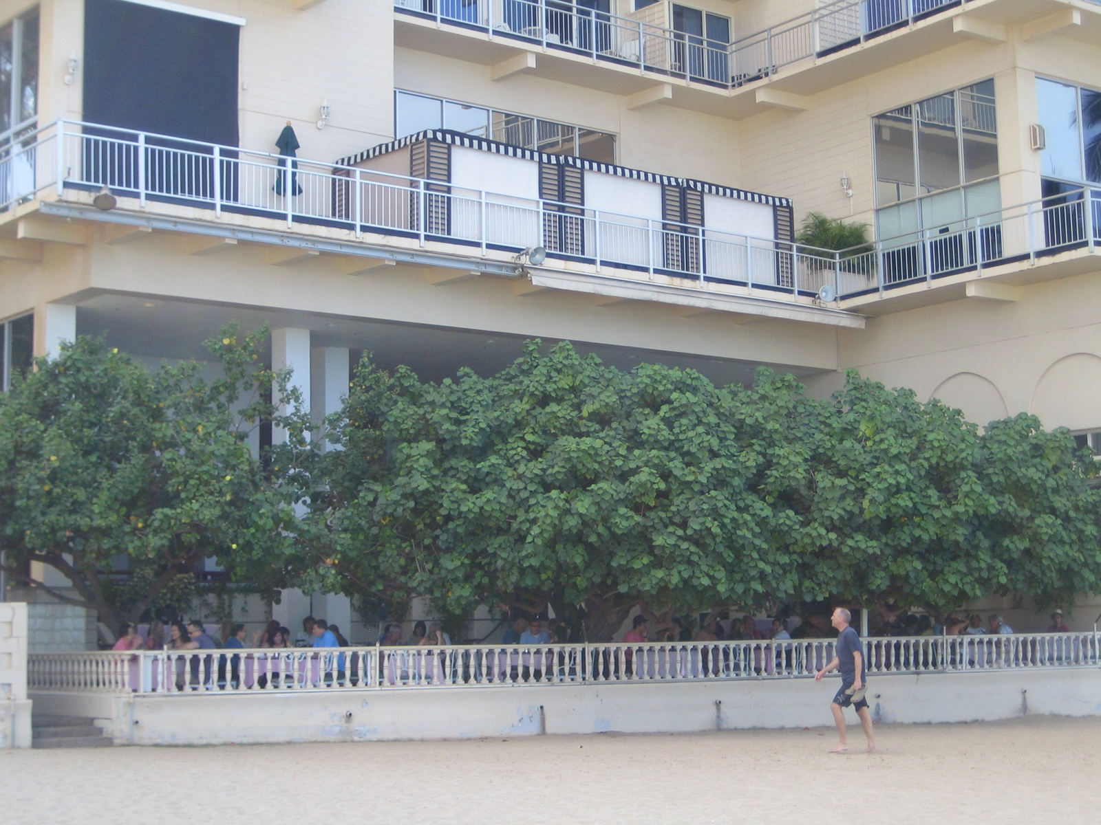 Considering how lovely the view was from the restaurant, I was surprised at how wholly the tree covers the place when viewed from the beach.