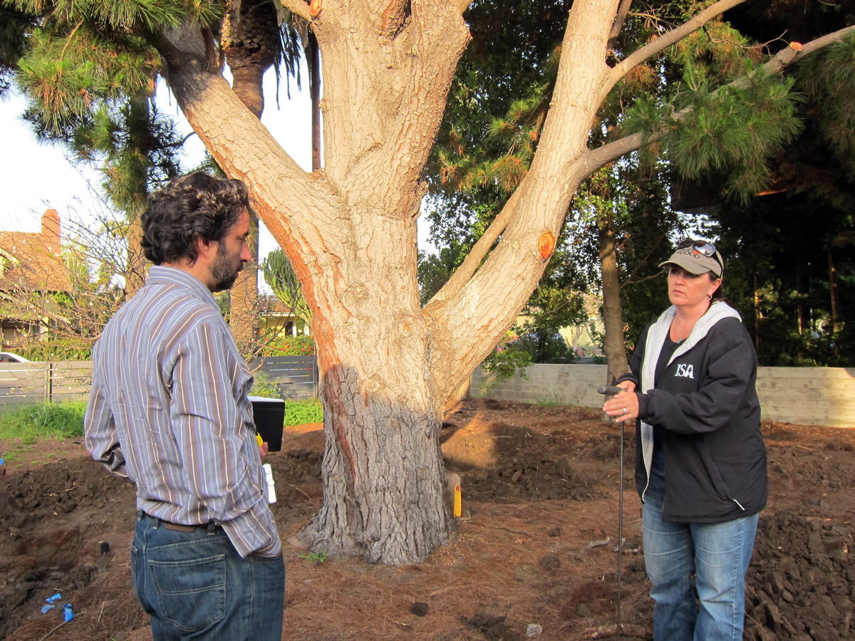Sebastian Mariscal discusses tree roots with arborist Lisa Smith. Which roots can we cut without endangering the tree? The roots range in diameter from a sixteenth of an inch through to fourteen inches in size.