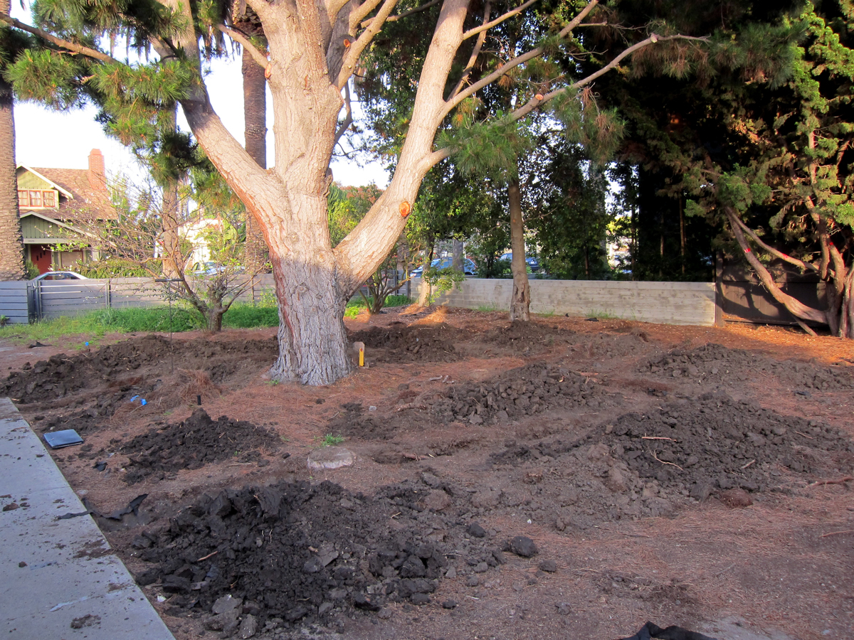 Shallow trenches were dug in the locations where concrete footings will be eventually be poured. The objective is to identify the exact locations of tree roots so we can plan the fabrication and installation of sleeves that will allow the roots to pass th