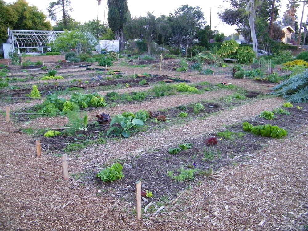 Learning Garden Rows