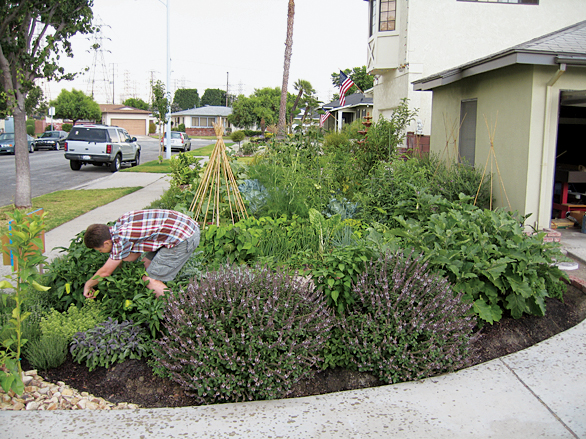 edible estates lakewood california regional prototype garden 2 foti michael jennifer in progress grown