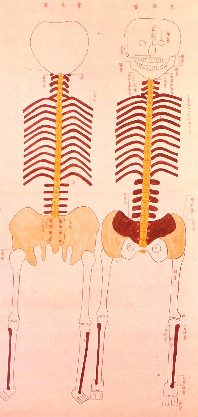 friday edo anatomy copy