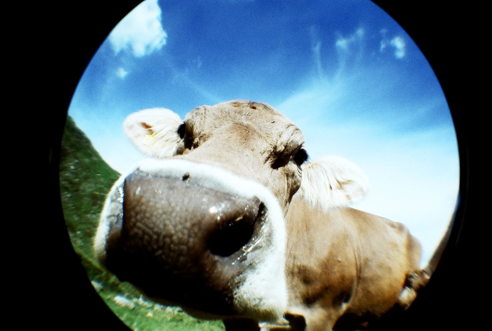 An example of a fisheye photograph, taken with Lomography's Shiawase camera.