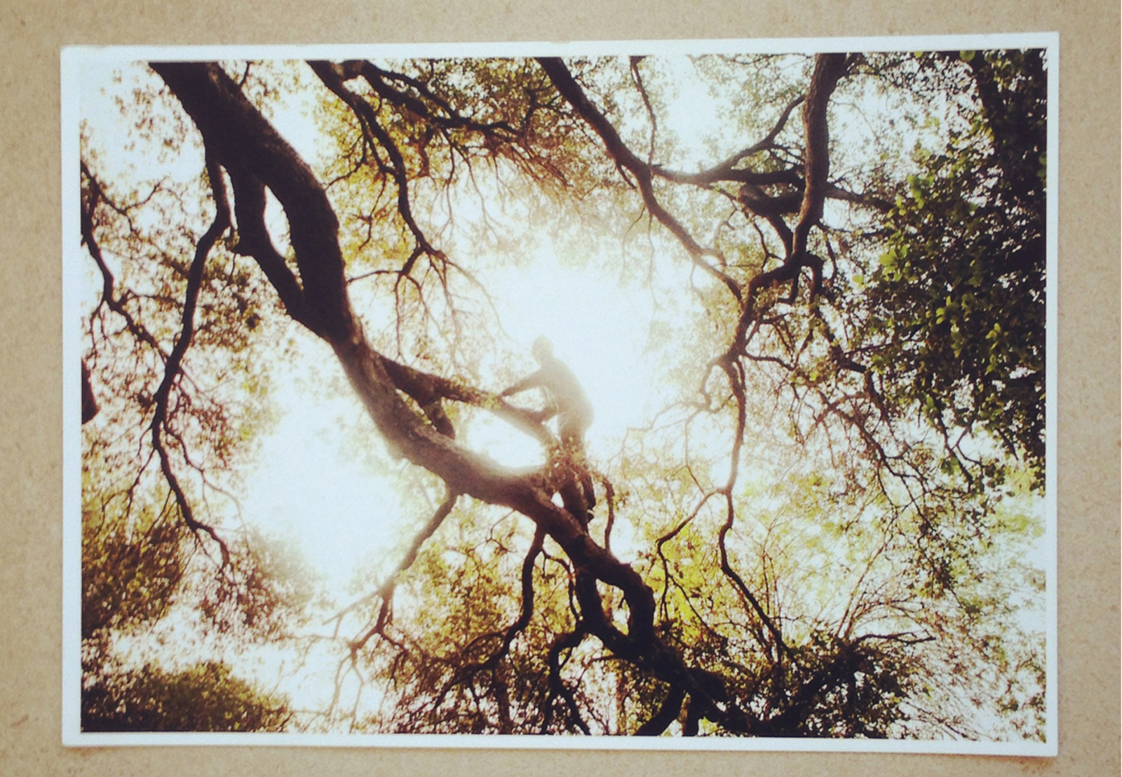 Landscape of tree and light by photographer Nathaniel Wood