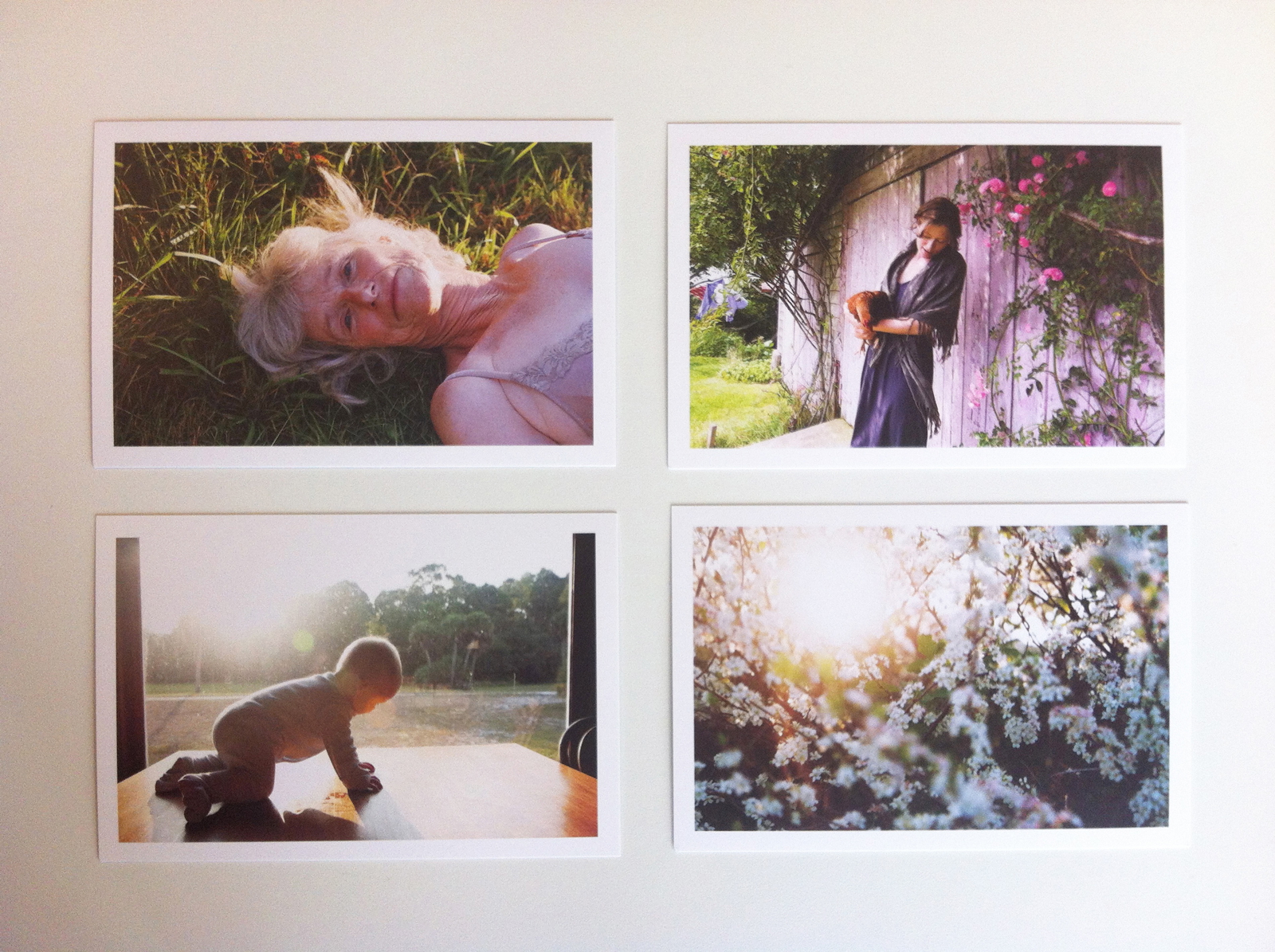 All four promo cards Katherine Wolkoff sent in one envelope. chicken baby flowers garden lifestyle beautiful table window