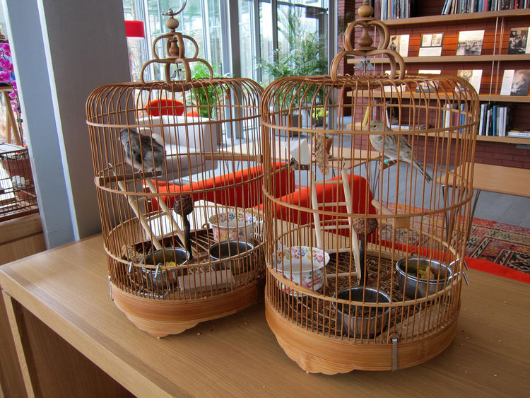 In the Living Room orientation space, it's not a sound installation you're hearing: it's real, live birds. (Apparently they have their own staff member as a caretaker.)