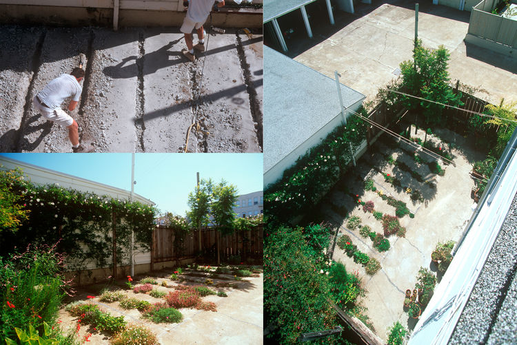 """The <a href=""""http://www.cmgsite.com/projects/gardens/crack-garden/"""">Crack Garden in San Francsico, California,</a> designed by <a href=""""http://www.cmgsite.com/"""">CMG Landscape Architecture</a>, winner of the <a href=""""http://www.aiasf.org/Programs/Awards_Pr"""