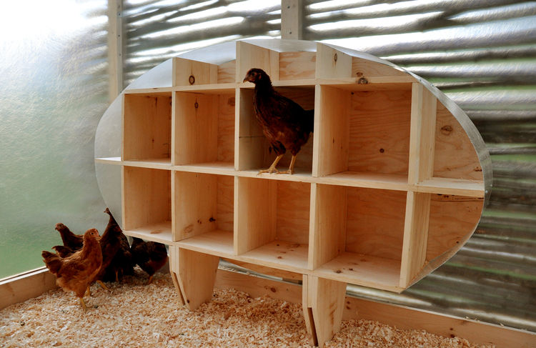 "Inside the coop is an egg-shape roosting box. Chickens won't lay eggs if their nesting boxes are on the ground so one student had the idea of a hovering egg, Linn says. ""When you're on the outside looking in,"" he adds, ""you see a profile of the big egg an"