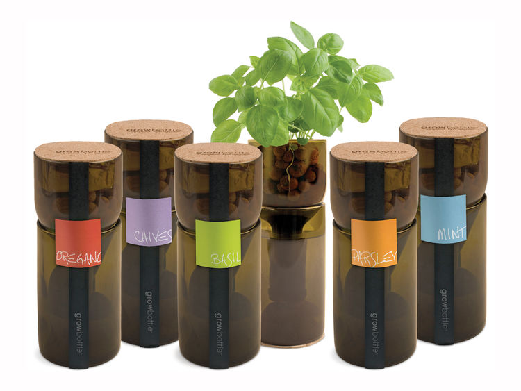 Grow Bottles are repurposed wine bottles used to grow basil, chives, mint, oregano, and parsley using hydroponics.