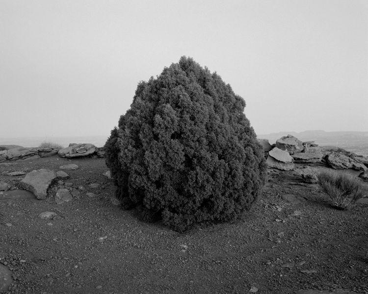 Juniper by Michael Lundgren