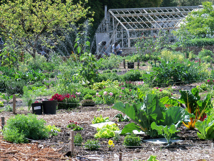 A sunny day at the Learning Garden at Venice High School.