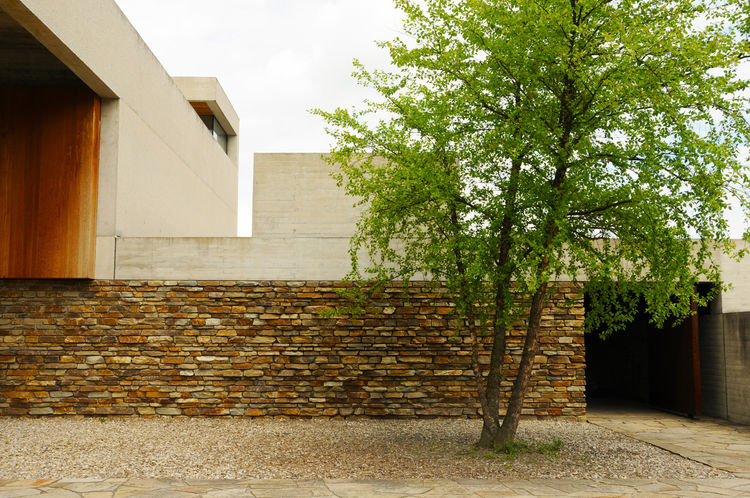 A single 'tree of life' is planted in the central courtyard, which faces the viewing room.