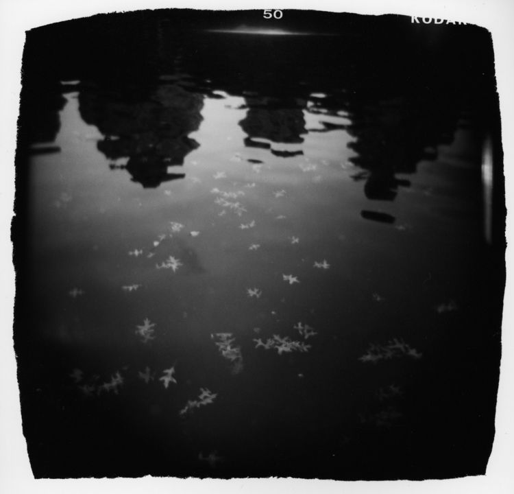 "Michelle Bates, ""Conservatory Water."""