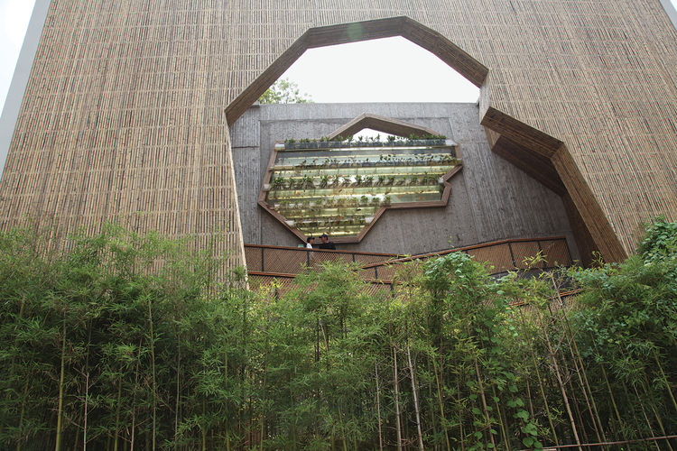 Another facade of the Ningbo Tengtou Pavilion shows another geometric cutout above a small forest of bamboo. Photo by Lu Wenyu courtesy of Amateur Architecture Studio.