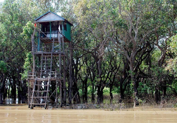 Flooded mangrove forests surround Kompong Phluk, an integral habitat for the fish that make up the livelihood of the thousands who live on the lake.