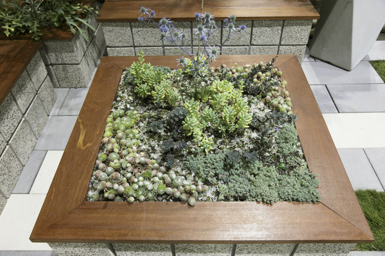 """An assemblage of succulents and other water-wise citizens inside a custom planter by <a href=""""http://www.formlainc.com/sitemap//"""">FormLA Landscaping</a>."""