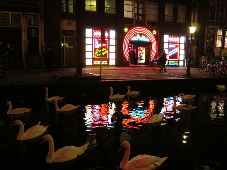 "And here's one of my favorite photos from my trip: a swan-filled canal in the red light district, illuminated by the glow of crude neon lights emanating from a place called ""Sex Palace."" So bizarre! So Amsterdam!<br /><br /><p><em><strong>Don't miss a wor"