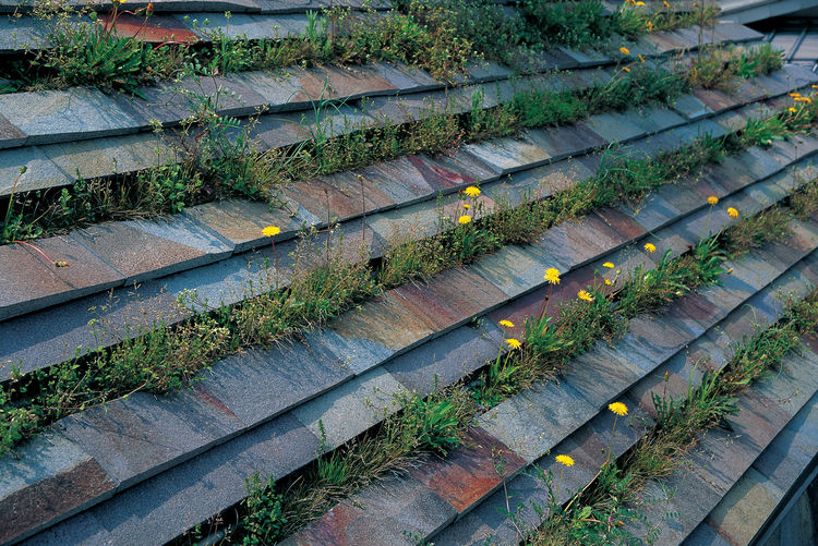 In the summertime, grass and dandelions blooming add a new hue to the roof of Fujimori's family home.
