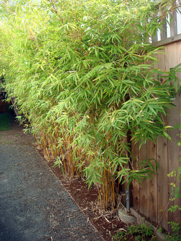 A living screen of bamboo provides additional privacy between neighbors. Landscape design measures like using native plants, avoiding invasive species, and opting for varieties that require no shearing garner points.