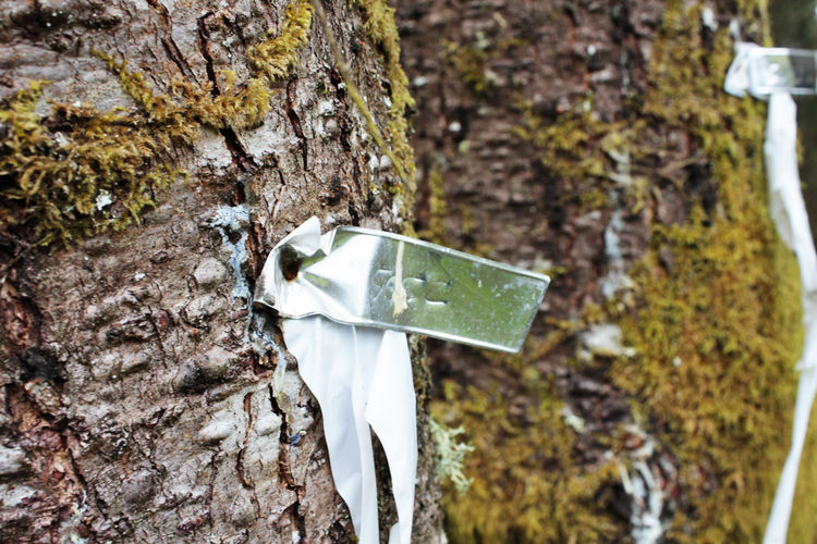 Trees are pre-tagged with metallic markers and designated with specific numbers that are recorded on an authorized site survey. The markers designate the areas within and outside the forest management area. The survey was a completed shortly after hiring