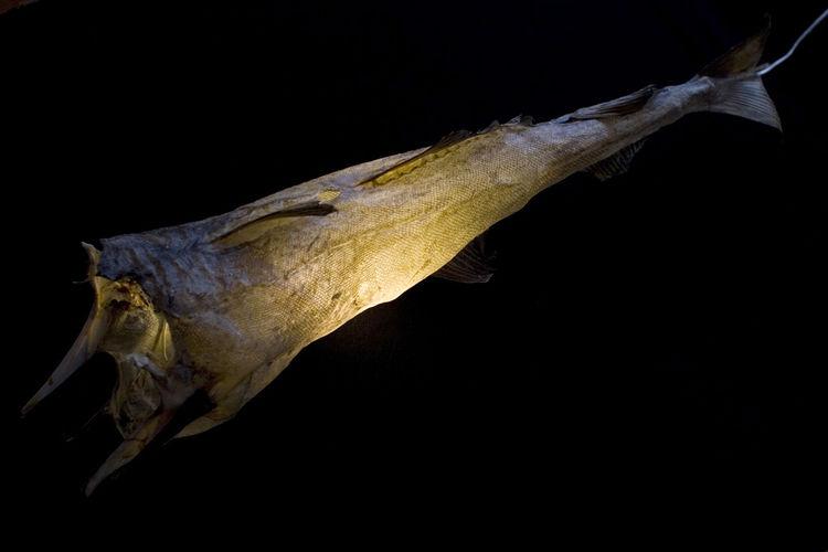 'Uggi Light,' made out of dried codfish by Fanney Antonsdóttir and Dögg Guðmundsdóttir of Iceland, 2001. Photo by Mona Møllebakken.