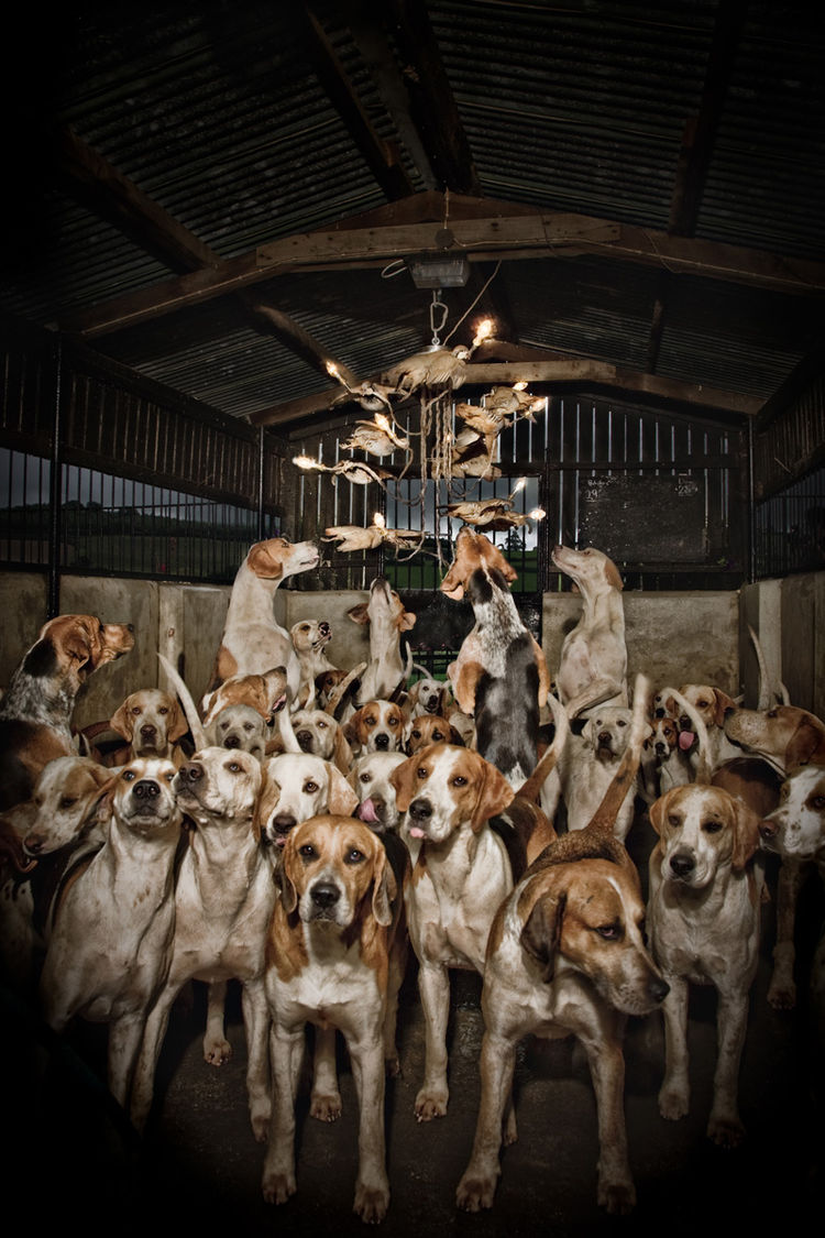Here's the Partridge Dance Chandelier, surrounded by hounds. Photo by Claire Rosen.