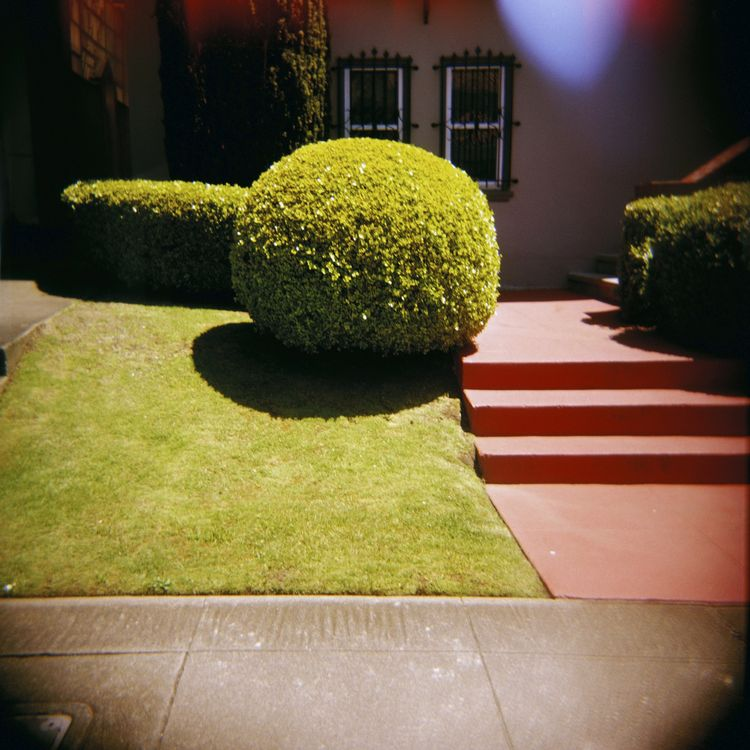 "PuiQuan Cheng, ""West Portal Topiary."""