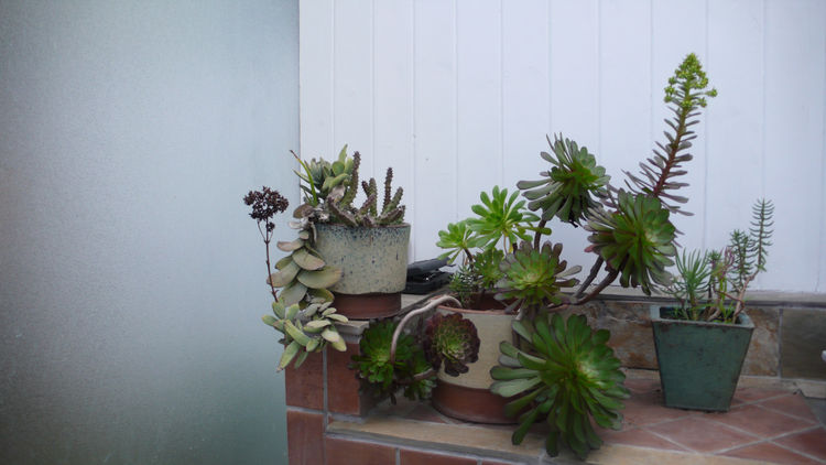 Our succulent cuttings are happy after the recent rains.