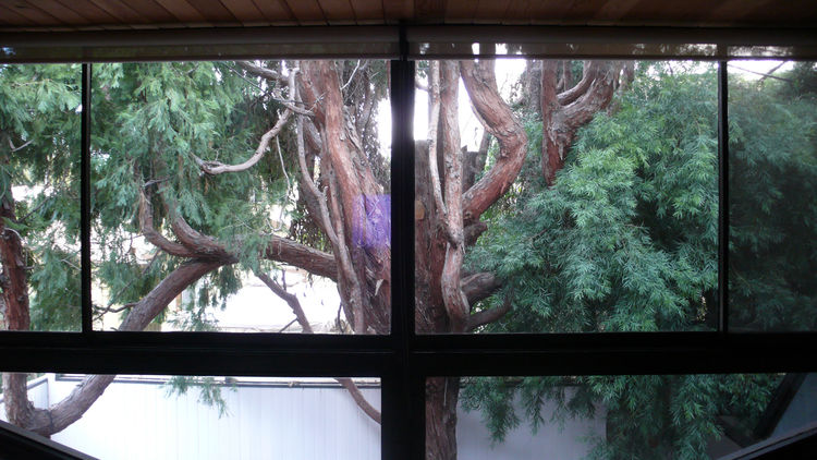 This is the view of the tree canopy from upstairs. It gives us privacy from the neighboring apartment buildings and houses, as well as constant entertainment from the local squirrels, possum and raccoons.