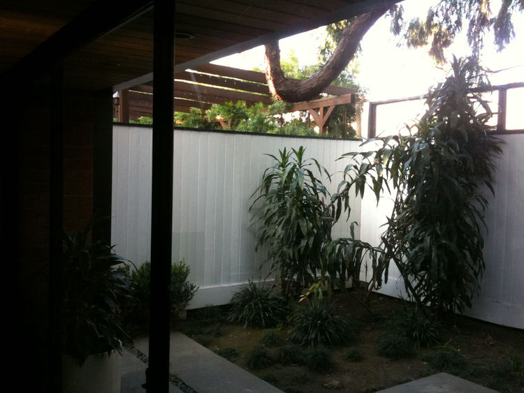 When we first moved in, we found the back courtyard filled with a strange and sad houseplants.