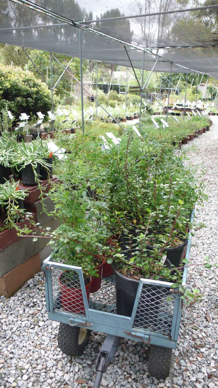 I collected my plants in a rubber wheeled cart provided by the nursery, so you can pull it around as you study the plants.