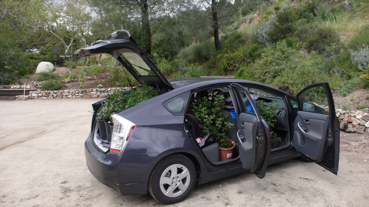 And then I did my best to carefully squeeze all 25 plants into my Prius, which required using every space except the driver's seat.