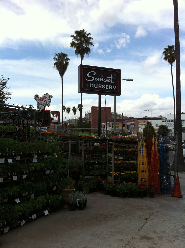 After dropping off the plants at our apartment in Hollywood I swung over to Sunset Nursery down the street to pick up a few bags of cedar mulch and organic topsoil for leveling out the low spots in the garden.