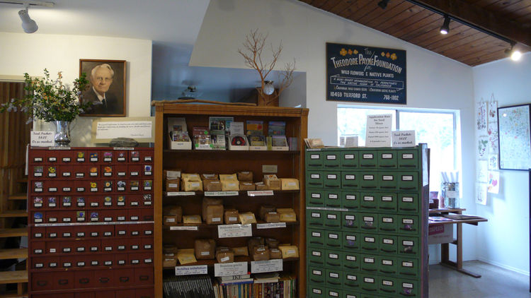 "For native plants I returned to the <a href=""http://www.theodorepayne.org/"">Theodore Payne Foundation</a> in Sun Valley, CA. The nursery is continuing the legacy of Theodore Payne, who in 1903 started a nursery and seed business specializing in native wil"