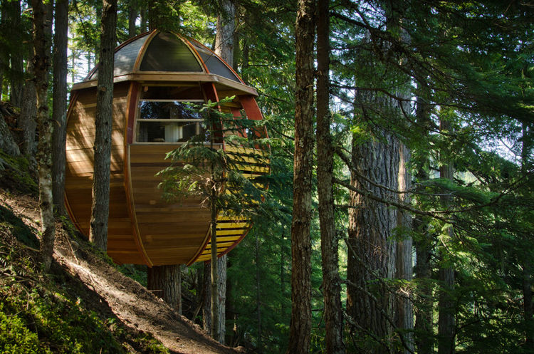 Allen's tree house is a challenging walk away from the nearest roadside or electrical source. Allen had to first construct scaffolding, then a deck to store his building materials. Then, with the deck in place, he built separate platforms for waste and fo