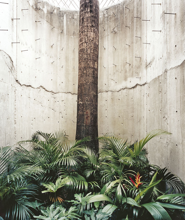 The house is largely enclosed for privacy, but hints of the outdoors, with its tropical light, are always close by. A royal palm enclosed in concrete suggests the contained foliage of courtyards found in older San Juan homes.