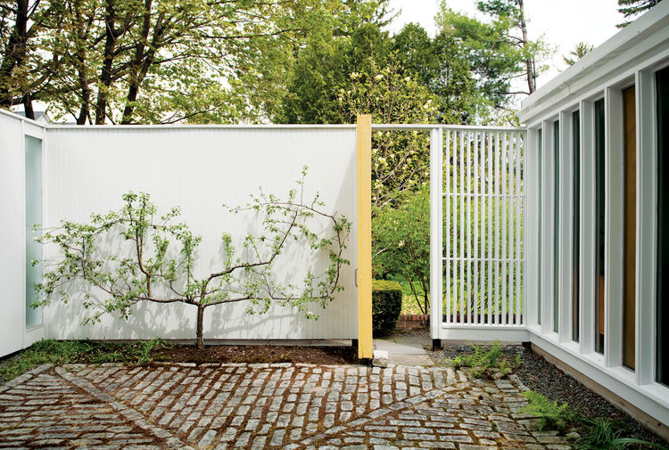 "Isaacson ""borrows the view"" of a neighbor's magnolia on the adjacent property by propping open the side door. His own espaliered apple tree makes the most of limited space."