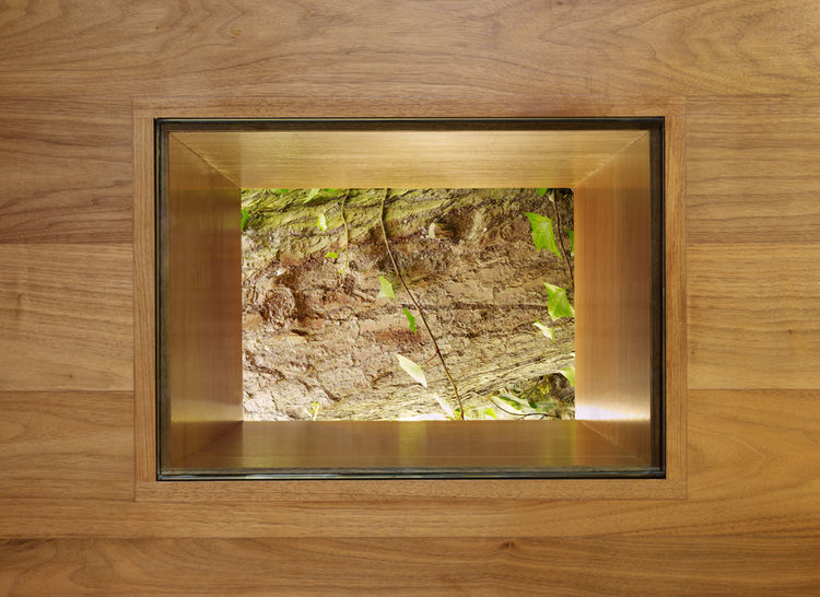To reconnect back to the fallen tree, the architects carved a portal in the walnut floor, affording a view of the inspiration for the house itself.