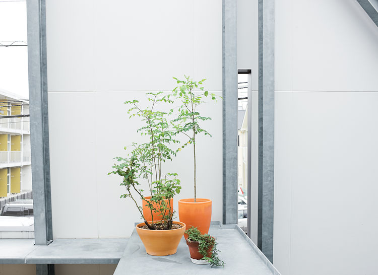 Plants thrive on the sheltered terrace.
