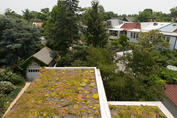 Living roof on a green house design in Washington, DC