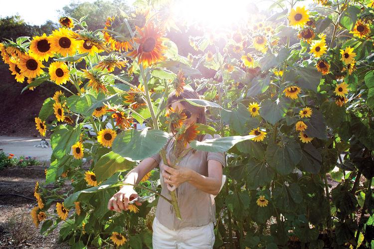 family flower farm, Los Angeles