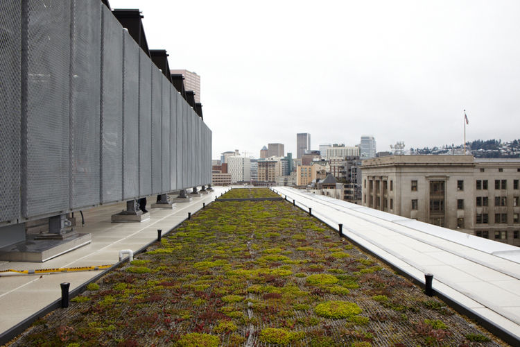 Green roof of Bud Clark Commons
