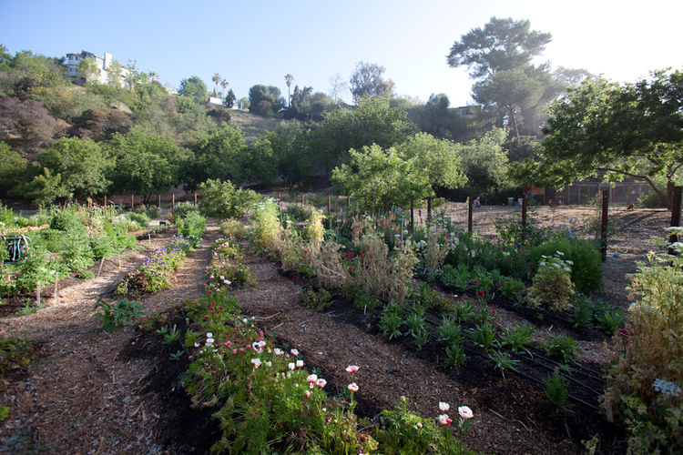 Outdoor gardening in Los Angeles, California