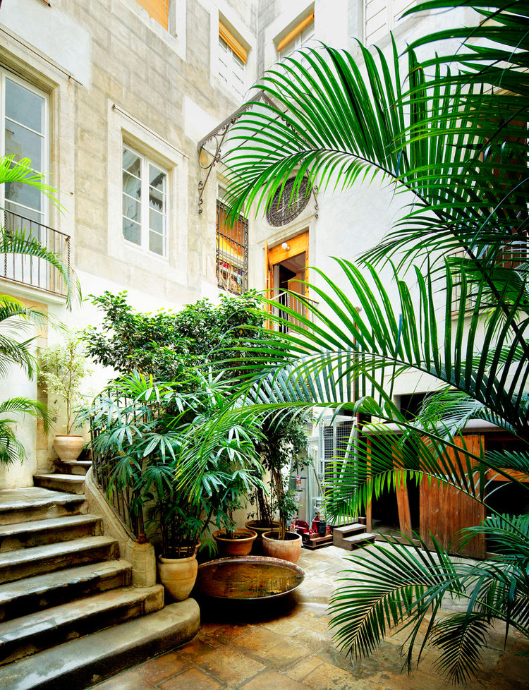 Indoor outdoor garden by concrete staircase