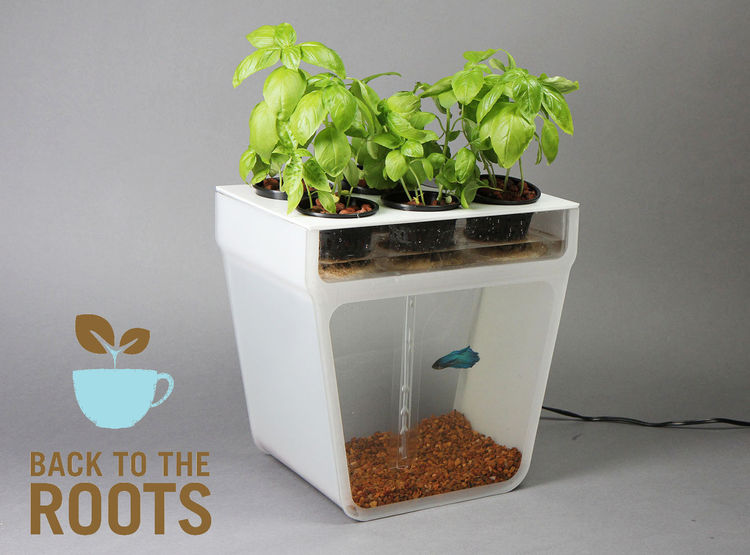 Aquaponics Fish Tank and Sustainable Garden
