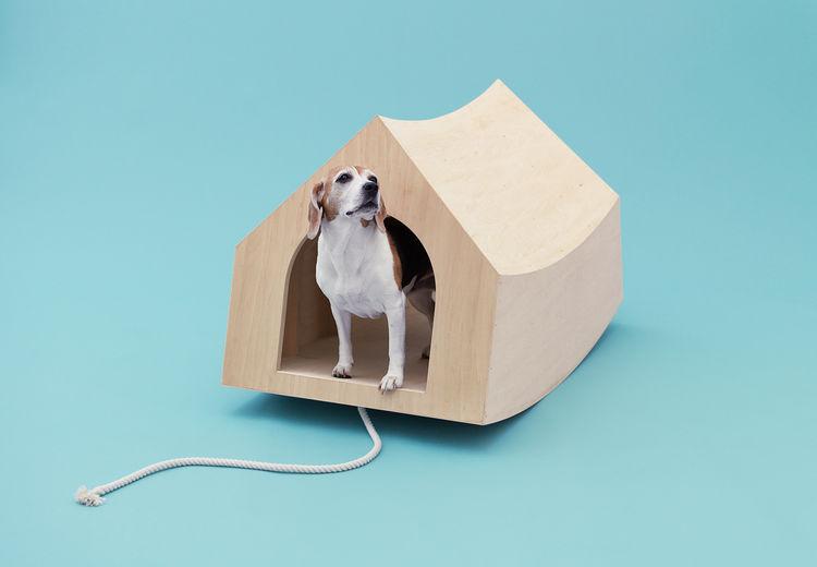 Modern wooden doghouse by MVRDV