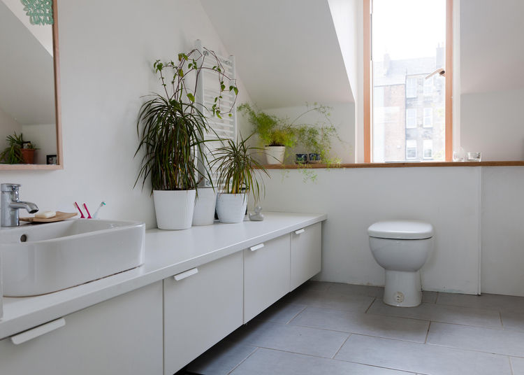 All-white bathroom with foliage and natural light