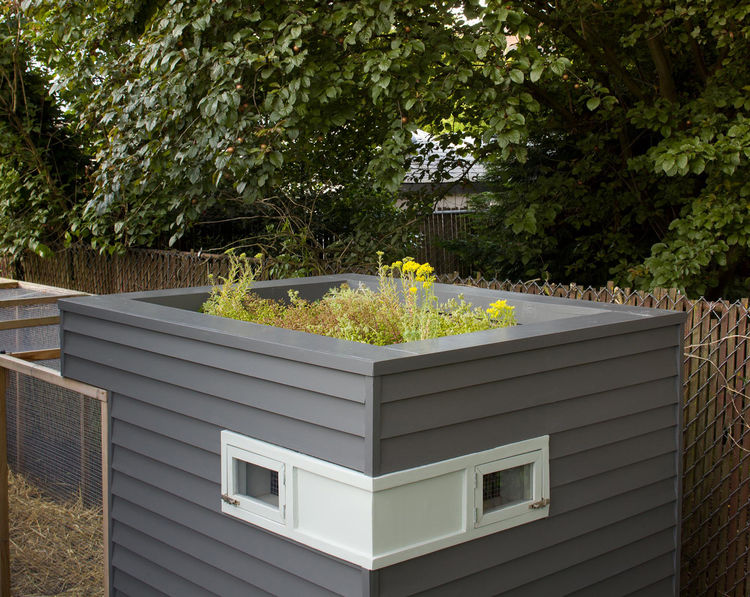 Modern chicken coop box roof garden