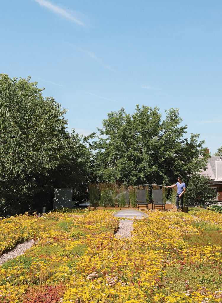 Roof garden with sedums and tall grasses