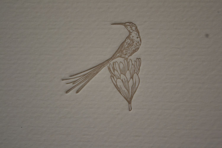 Sugarbird note card by The Letterpress Company